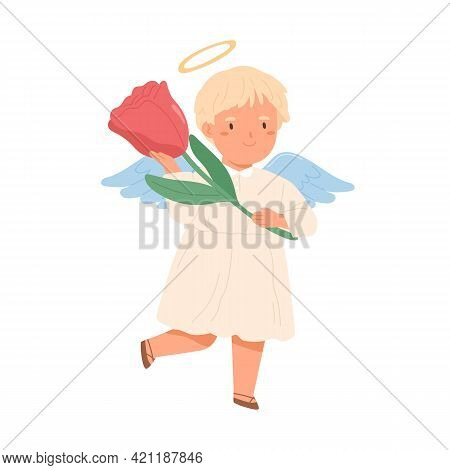 Cute Happy Angel In Dress With Nimbus And Wings Holding Rose Flower In Hands. Little Peaceful Boy Fr
