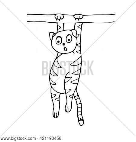 Cat Hanging On A Branch Isolated On White Background