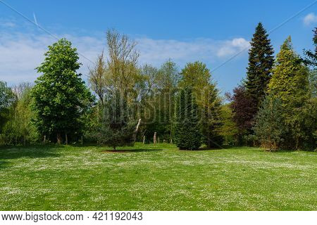 The Grassy Lawn Is Strewn With Blooming White Flowers. Coniferous And Deciduous Trees In The Backgro