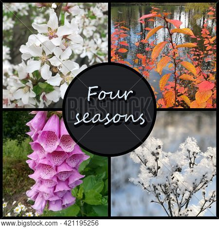 A Collage Of Four Photos, With The Inscription (four Seasons) Representing Each Season: Spring, Summ