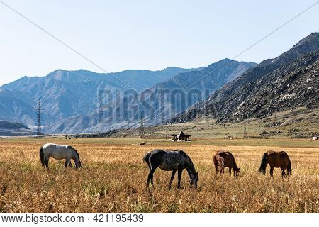 Horses In The Pasture. Mountains On The Horizon. Autumn Landscape