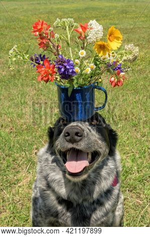 Sweet and funny image of a spotted dog balancing a colorful bouquet of flowers in a blue cup on her head; perfect for a congratulations card