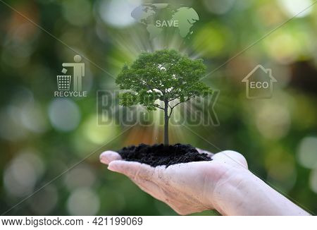 Human Holding Tree Growing On Green Background. Eco Earth Day Concept And Save World Concept, World