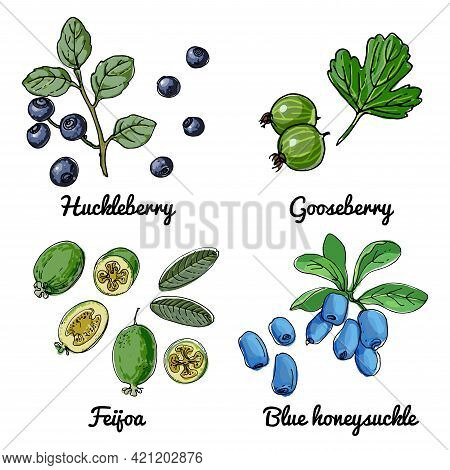Vector Food Icons Of Berries. Colored Sketch Of Food Products. Huckleberry, Blueberry, Gooseberry, F