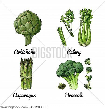 Vector Food Icons Of Vegetables And , Herbs. Colored Sketch Of Food Products. Artichoke, Celery, Asp