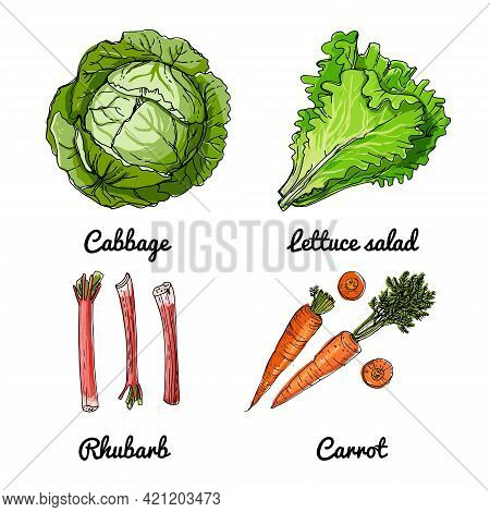 Vector Food Icons Of Vegetables And Spices, Herbs. Colored Sketch Of Food Products. Cabbage, Lettuce