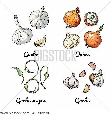 Vector Food Icons Of Vegetables And Spices, Herbs. Colored Sketch Of Food Products. Onion, Garlic