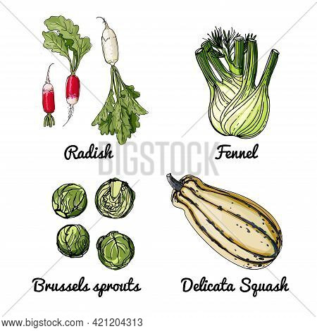 Vector Food Icons Of Vegetables. Colored Sketch Of Food Products. Radish, Fennel, Brussels, Delicata