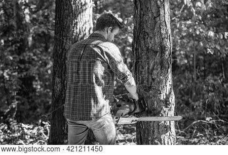 Man Forester Use Saw To Cut Tree. Search Firewood For Picnic Campfire. Surviving In Wild Nature. Hum
