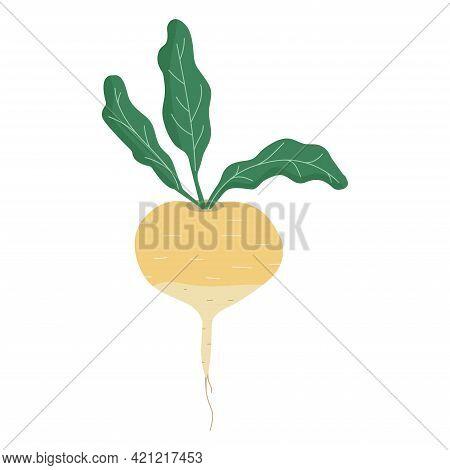 Turnip Isolated On White Background, Eco Food