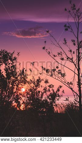 Colorful Summer Sunset, Summer Evening Landscape Photo With Trees Silhouettes Under Colorful Sky