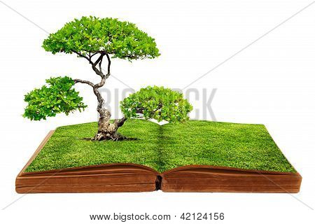 A big tree growth from a book