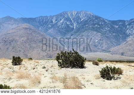 Creosote Bush On Windswept Sand Dunes On Arid Badlands With Mt San Jacinto Beyond Taken At The Rural