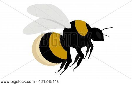 Bumblebee In Flight On A White Background