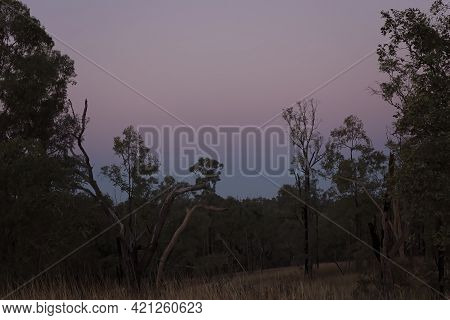The Pink And Blue Sky Hues Of Sunset Over The Bushland Of Outback Australia