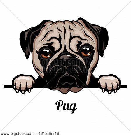 Pug - Dog Breed. Color Image Of A Dogs Head Isolated On A White Background