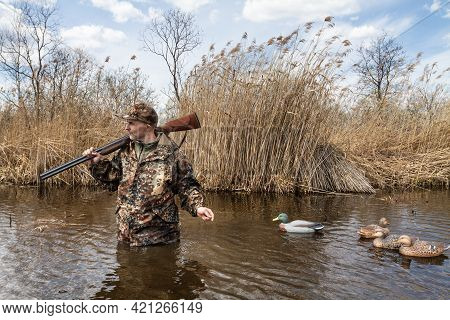 A Hunter Walks Through A Reed-covered Lake In Waist-deep Water. He Pulls Plastic Duck Decoys Behind
