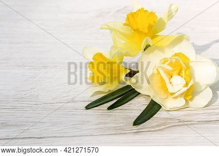 Flower Arrangement Of A Daffodil Plant For Congratulations On A Holiday Or Event On A Wooden Backgro