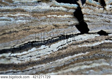 European Hornet House. Striped, Variegated Abstract Background.