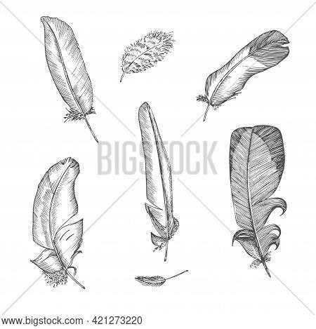 Set Realistic Sketch Of Bird Feather On Isolated Background. Detailed Ink Line Pen Clip Art, Black A