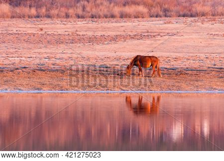 Red Pregnant Horse On Spring Pasture Near Lake. Early Spring Morning.