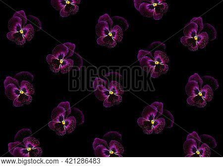 Abstract Floral Background Of Purple Pansies On Black. Violets In Drops Of Water