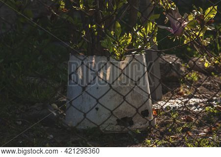 White Bucket Behind The Fence. Plastic Bucket Behind The Fence Mesh