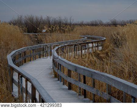 Wooden Boardwalk Through Marsh Land In Early Spring