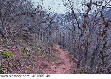 Grandeur Peak Hiking Trail Loop Views Spring Back Around Bonneville Shoreline Pipe Line Overlook Rat