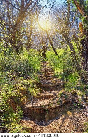 Path Trough Magical Enchanted Forest.  Steps Made From Roots Of Trees Going Upwards. Montenegro, Tiv