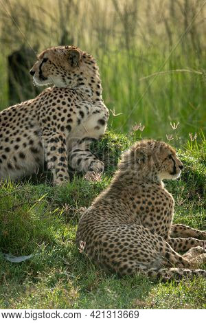 Close-up Of Cub Lying Down With Cheetah