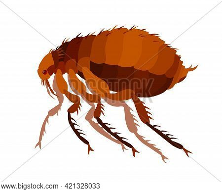 Common Brown Flea, Insect Parasite, Carriers Of Plague And Other Diseases And Infections, Bloodsucke