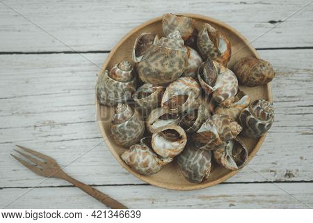 Babylonia Areolata Shellfish Seafood On Wood Plate. Top View