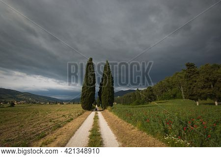 Spring Avenue With Cypresses In Umbria, Italy, Europe