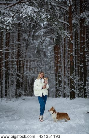 Blonde Young Female With Ginger White Chihuahua And Welsh Corgi Pembroke In A Snowy Forest In Winter