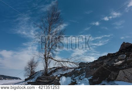 A Birch Grows On The Slope Of A Snow-covered Hill. One Branch Is Broken, Bent To The Ground. Bare Tr