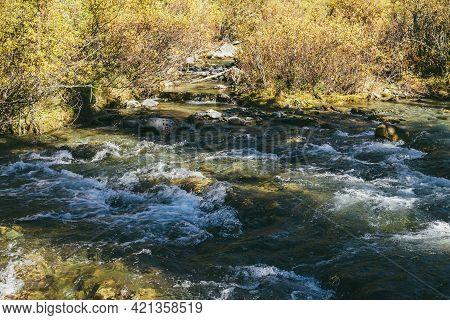 Scenic Alpine Landscape With Mountain River In Wild Autumn Forest In Sunshine. Vivid Autumn Scenery