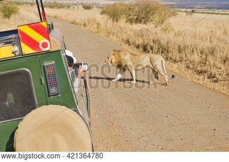 Safari In Africa, Tourists In Safari Car Watching Lion On Wildlife Drive In African Savanna