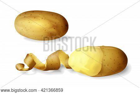 Potato Peeled 3d Vector Illustration Of Isolated Realistic Potato Vegetable Whole And Half Peeled Wi