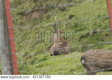Close Up Of Deer In An Enclosure