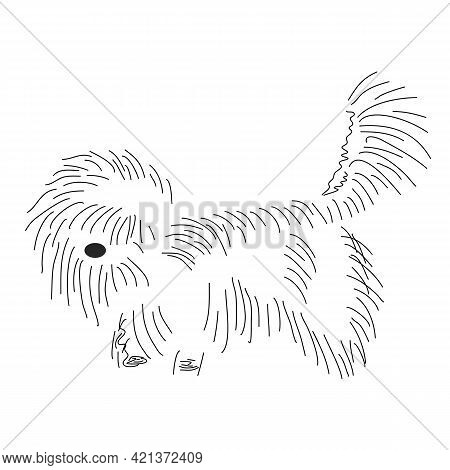 Funny Shaggy Dog. Silhouette Of A Cute Lapdog With Outlines. Pet Grooming, Leisure, Friendliness. Ha