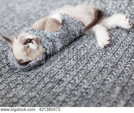 Kitten sleeping on gray blanket. Cat sleep in clothes