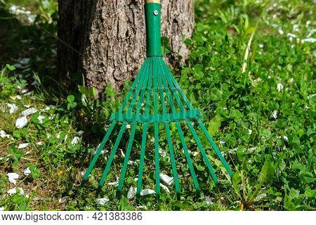 A Green Fan Rake Stands At The Trunk Of A Tree In The Rays Of The Sun.