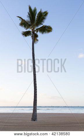 Single Straight Palm Tree On Sandy Beach