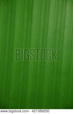 Blured Striped Green Background, Lighten Grungy Green Texture.