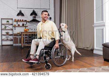 Labrador Dog Pushing Wheelchair With Cheerful, Disabled Man.