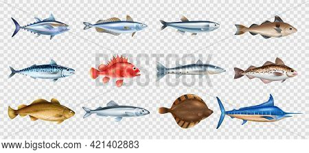 Sea Fish Realistic Transparent Set With Different Species Symbols Isolated Vector Illustration