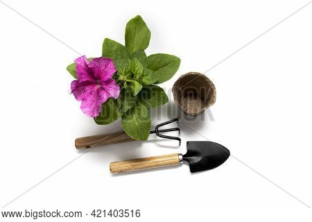 Gardenin. Garden Tools For Planting Petunia Flowers, Rake And Shovel And Flowers, View From Above, I