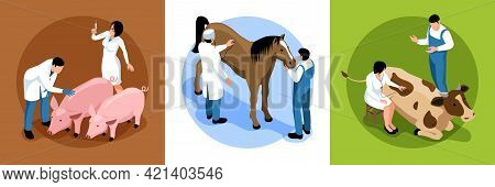 Farm Veterinary Concept Isometric Set With Large Animal Vet Examines Cattle Cow Pig Horses Patients
