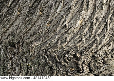 Gray Bark With Large Willow Bark Pattern